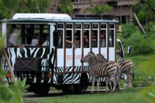safari park & tanah lot