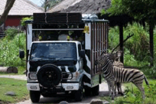 BALI SAFARI tiger Packages.