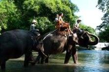 elephant ride & kecak