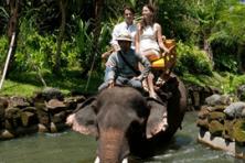 elephant ride & ubud
