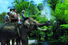 elephant ride & sunset