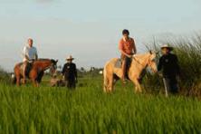 horse riding & jatiluwih