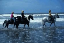 HORSE RIDING rafting